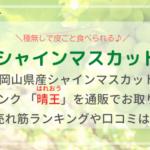 岡山産シャインマスカット